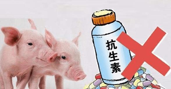 预计到2030年,兽用抗生素或将达10万吨,中兽药或成为无抗养殖利器