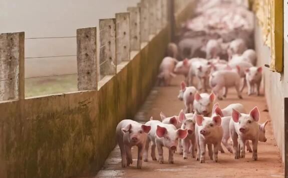 陕西:生猪价格高位回落,生猪生产恢复较好,产能稳步回升