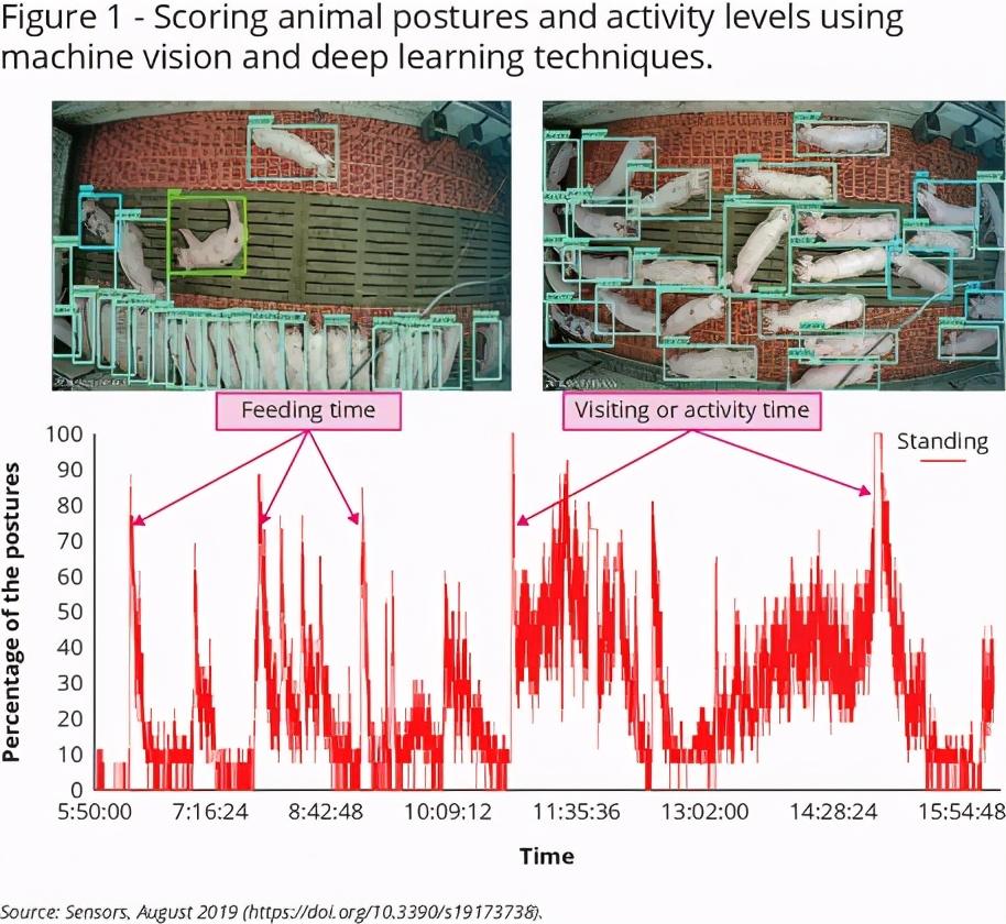 图1-使用机器视觉和深度学习技术对不同时间动物姿势和活动水平进行评分。