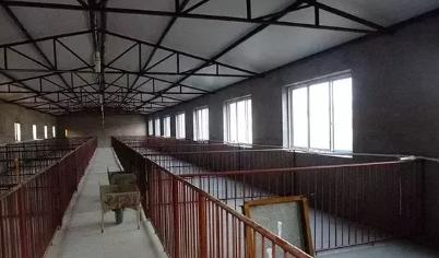 农村小型养猪场设计,最低成本科学养猪简易猪栏猪舍建造图