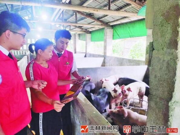 广西玉林:开展生猪活体抵押贷款试点工作!