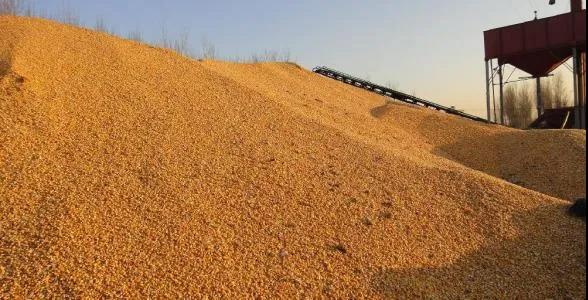 饲企宣布涨价第三轮涨价!玉米价格最高2660元/吨,大豆创18年历史新高!