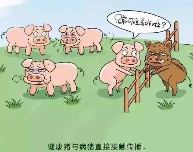 为防止德国非洲猪瘟传入我国,保护畜牧生产安全,要注意以下安全事项