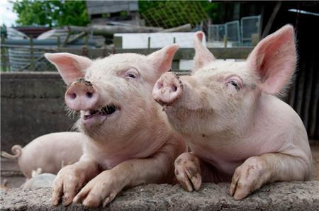 技术—天气转冷,专家支招猪场这样防控非洲猪瘟