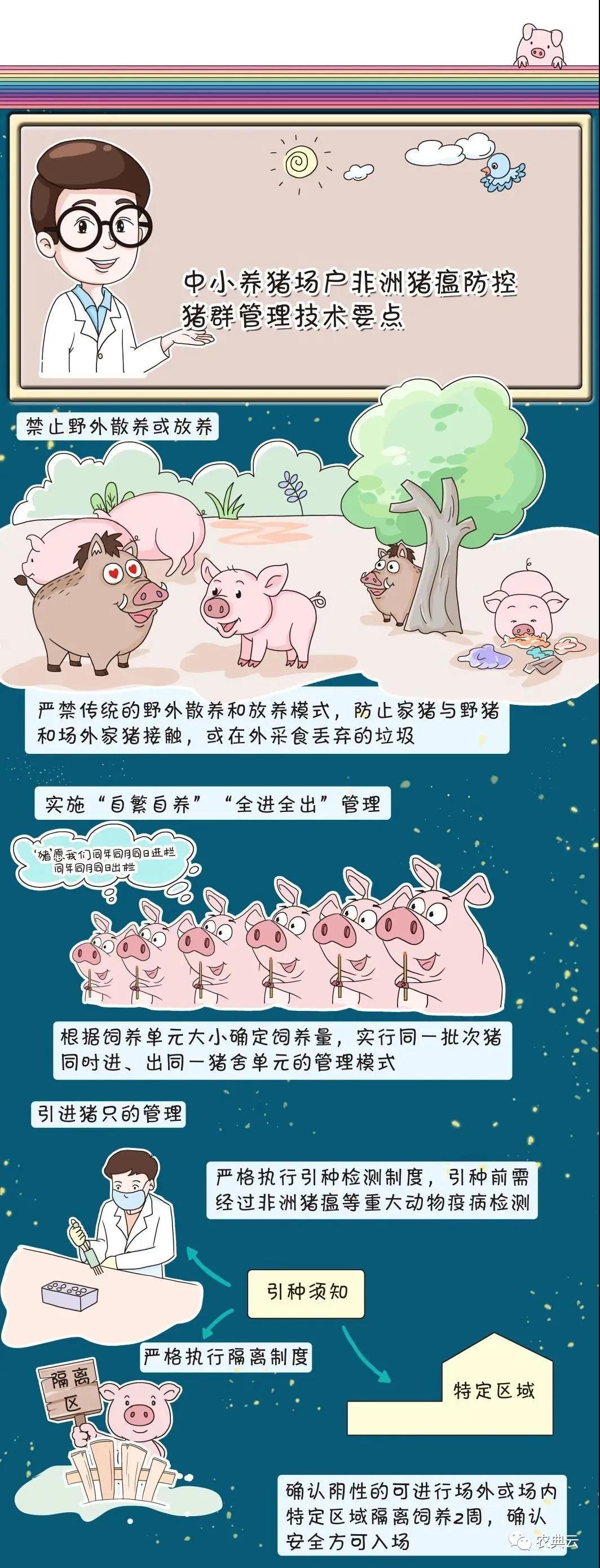 中小养猪场户:冬季非洲猪瘟防控猪群管理一定要注意的要点!