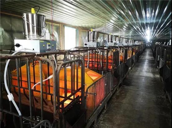 新希望加速布局猪产业,产能目标扩大1.6倍至4000万头!