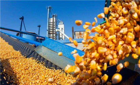 """12月1日饲料原料:市场倾向优质玉米,豆粕将""""乘风破浪""""?"""
