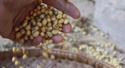 12月2日饲料原料:农户卖粮情绪高涨,玉米豆粕仍存上涨空间