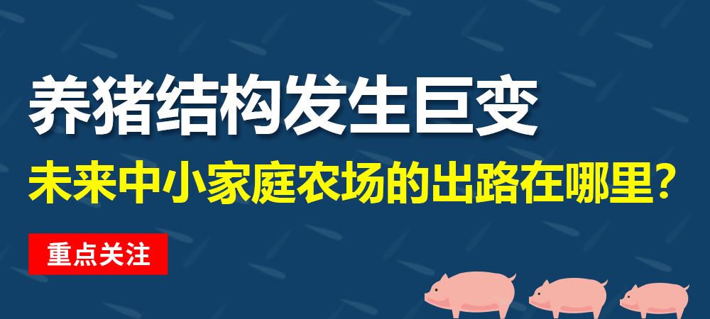 养猪结构发生巨变,未来中小家庭农场的出路在哪里?