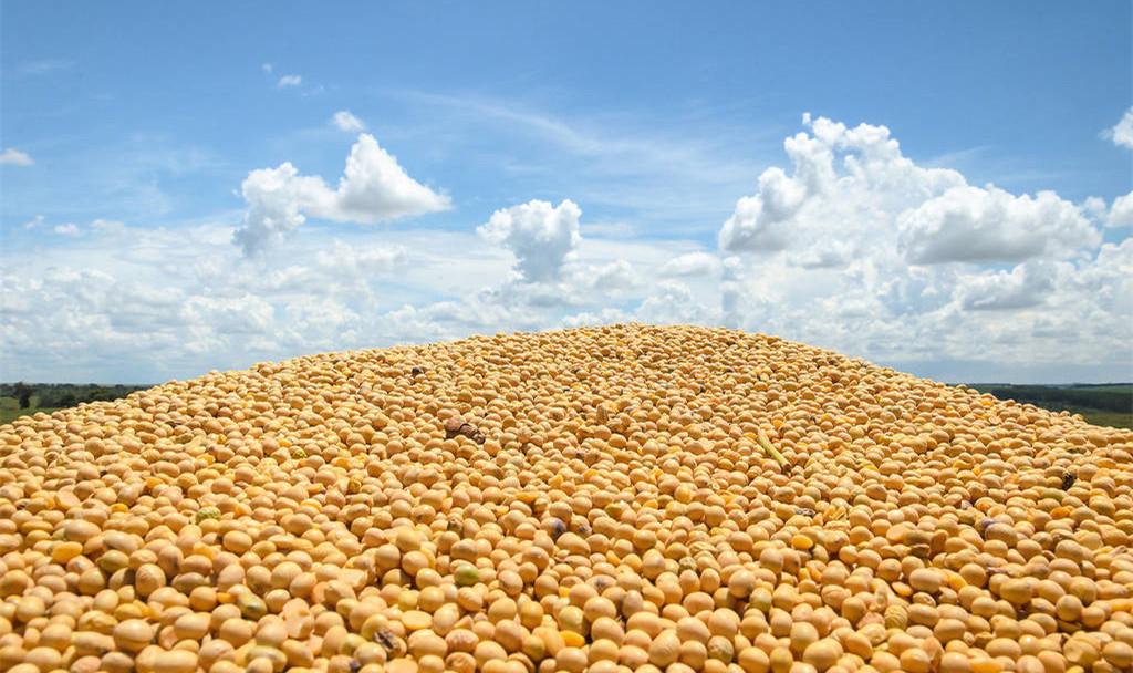"""大豆价格继续上涨,东北最高已到2.9元每斤,大豆市场不""""简单"""""""