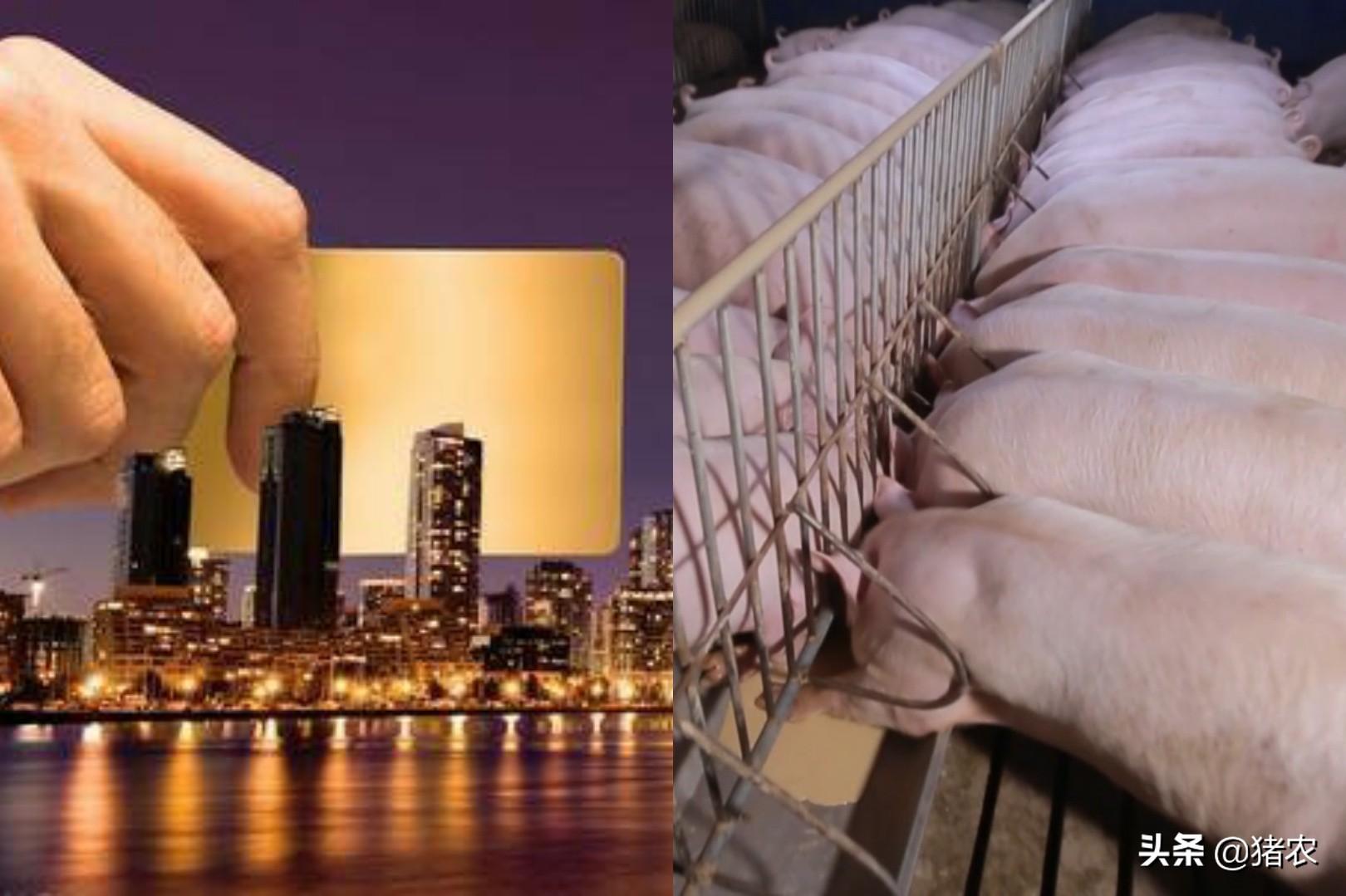 超1000家房企转行养猪,卖猪比卖房挣钱?