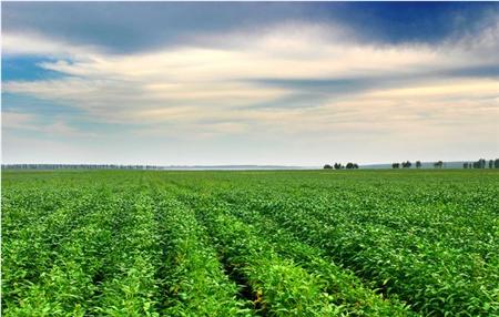 12月15日饲料原料,玉米避险为主,大豆进口破一亿,豆粕难涨