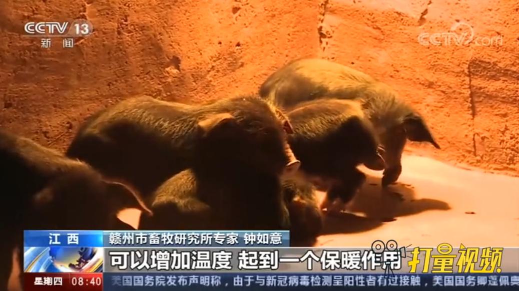 江西:农业部门多举措应对低温天气,保障生猪养殖