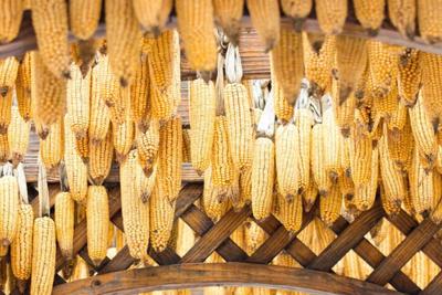 连发两条玉米交易公告!103431吨的玉米让市场再度惊心!
