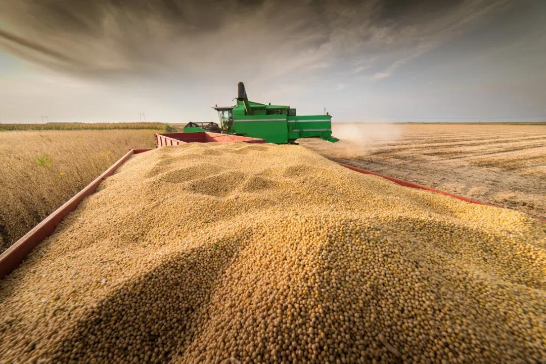 12月18日饲料原料:玉米政策调控节奏加快,豆粕市场两大利好来袭!