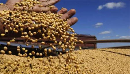 12月22日全国豆粕价格行情,国内大豆压榨缩量,需求转旺,豆粕价格强势回归!