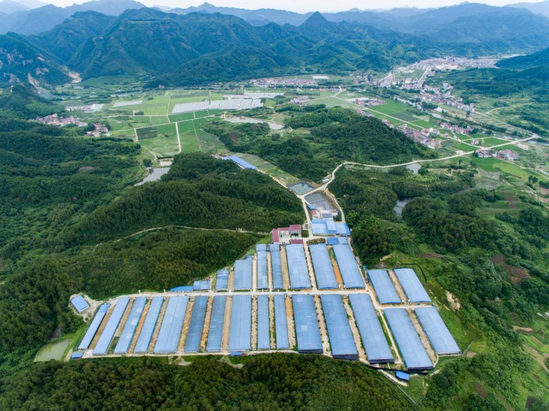 湖南永州:新建生猪养殖场46个、在建万头养殖场44个,全市出栏生猪590.3万头