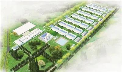 牛!2500亩的土地上,21栋6层楼房猪舍,每栋出栏10万头,年出栏210万头!