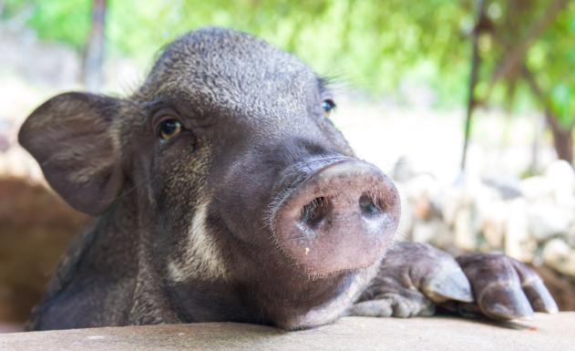 要建设好猪场,先得知道有哪几种猪场?有何类型?