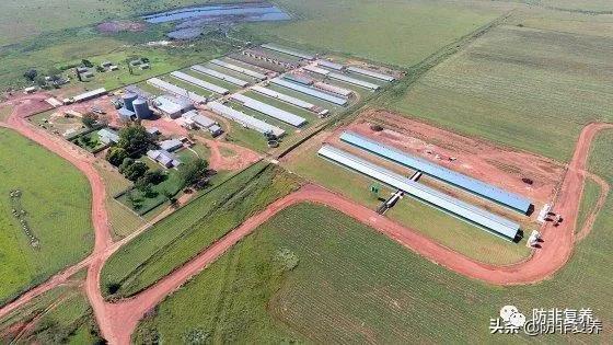 吸取经验!在疫情压力和挑战下积极前行的南非猪场