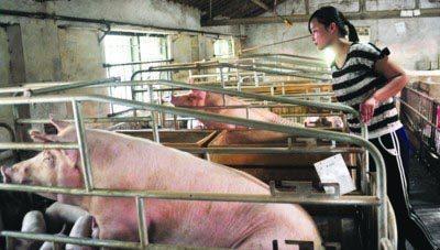 90后女大学生养猪,一年赚200多万,是怎么做到的?