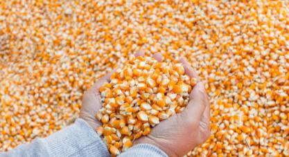 12月29日饲料原料:玉米进口激增122.7%!豆粕上涨抗不过元旦?
