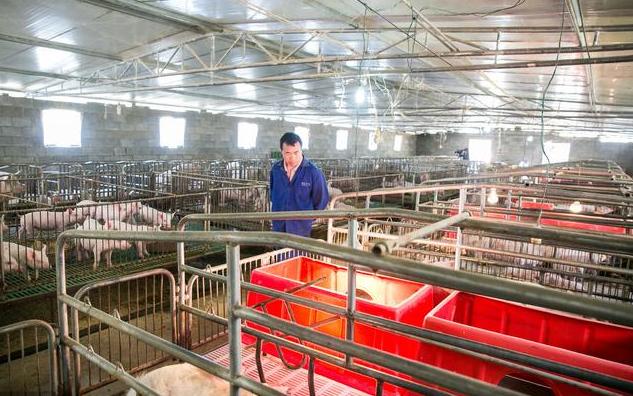 中小型养殖户必看!中小型猪场猪舍框架如何设计?