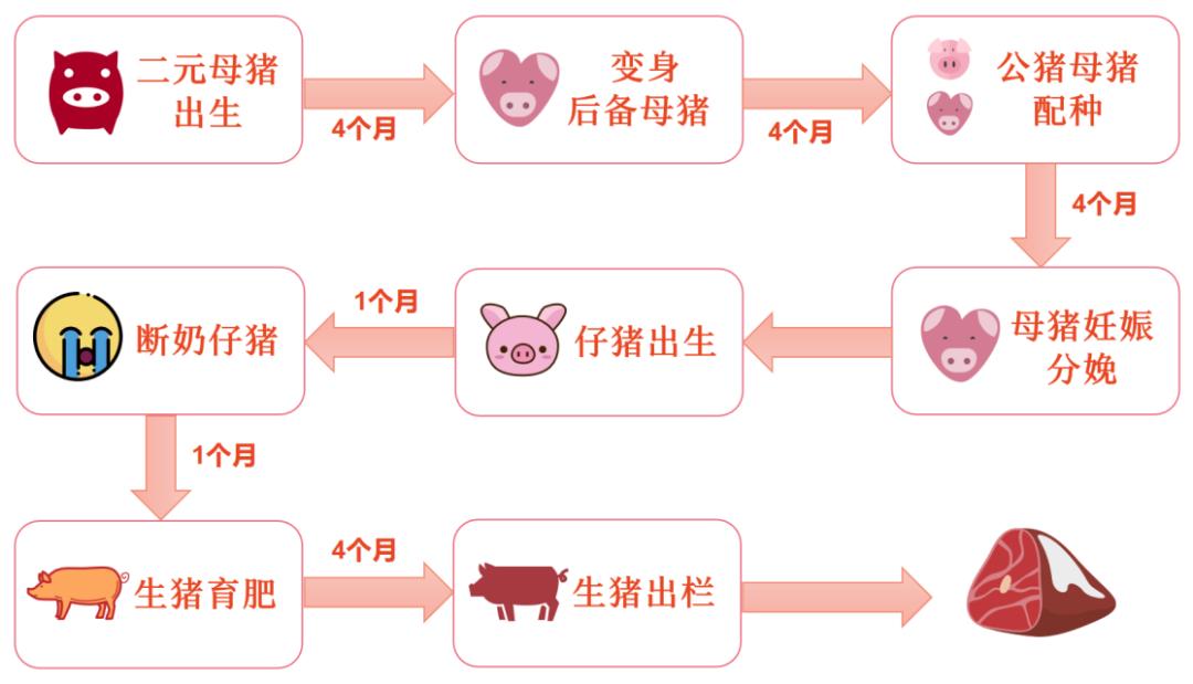 我国生猪市场规模已由正常年份的近万亿元上升为近2万亿元!
