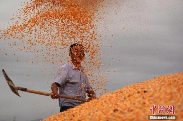 农业农村部:到2025年农产品加工环节损失率降到5%以下