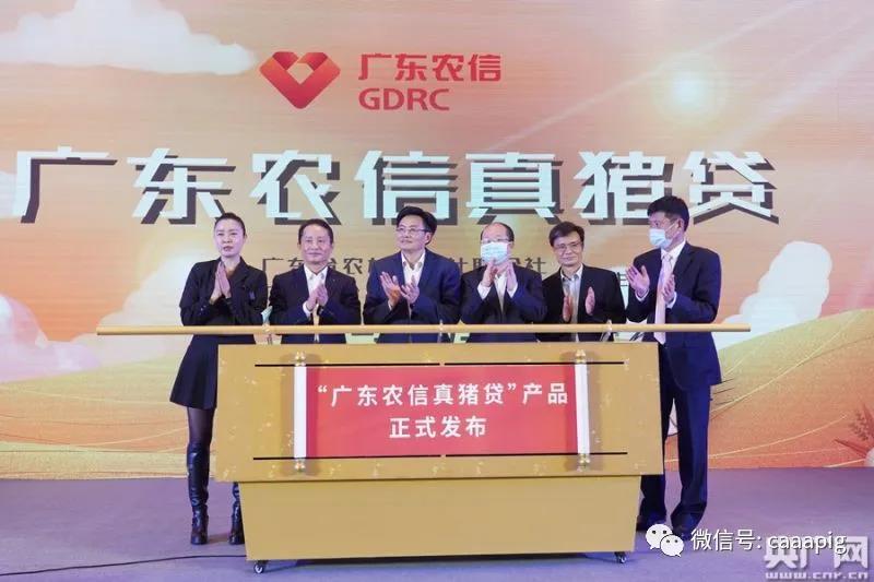 """好消息! """"广东农信真猪贷""""正式发布,最高贷款额度提高十倍!"""
