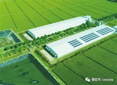 """深挖!松林食品:上海首张""""生猪养殖""""绿色食品证书含金量在哪里?"""