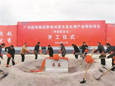越秀集团黔南州首个现代化生猪养殖项目开工——越秀集团贵州生猪全产业链产业帮扶项目成果显著
