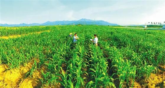 农业农村部:2021年重点扶持这样28个项目,抓紧申报!