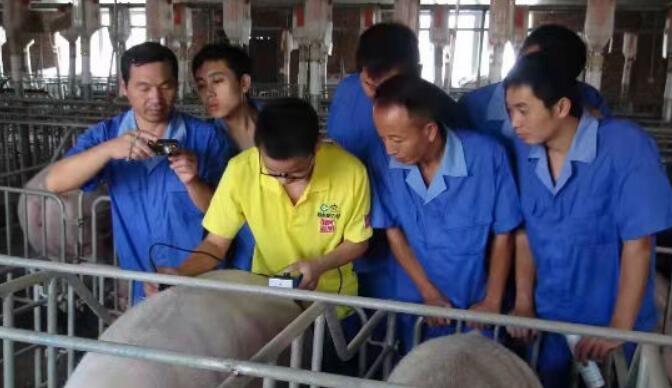 建行四川省分行:量身定制全产业链融资模式助力生猪养殖