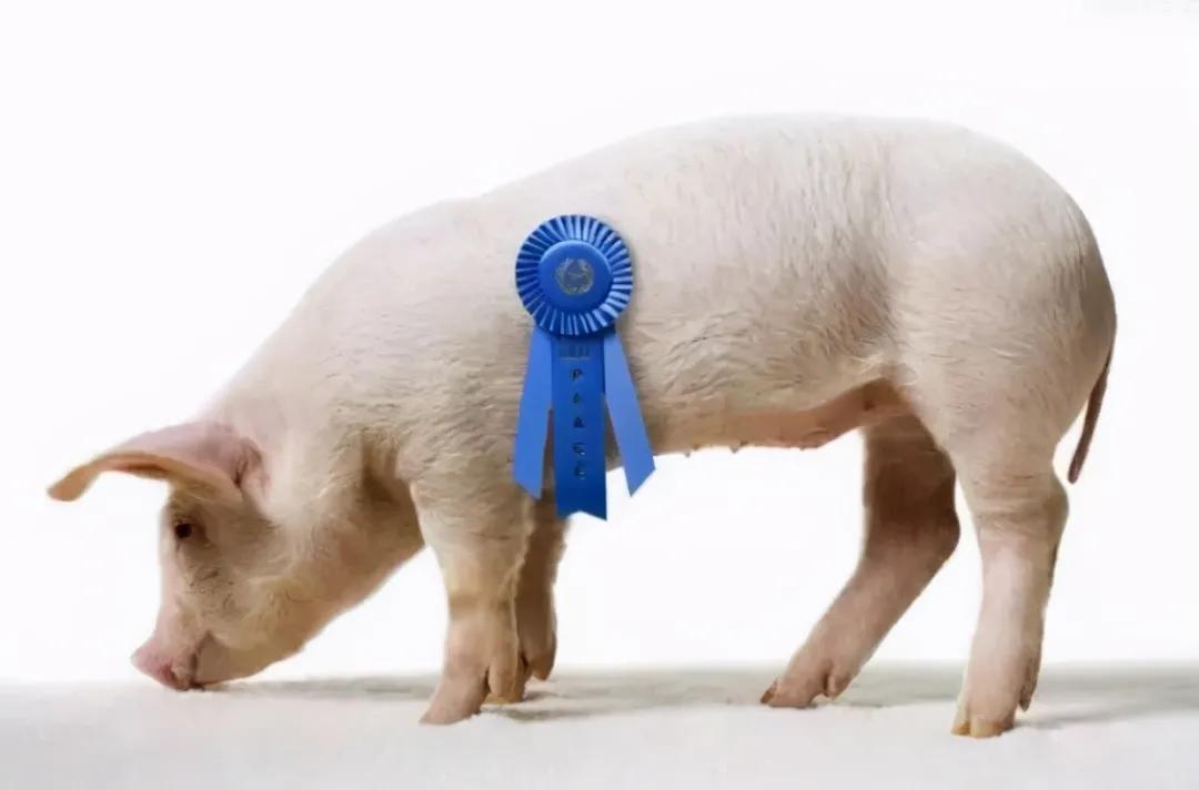 全球第一大猪肉生产商