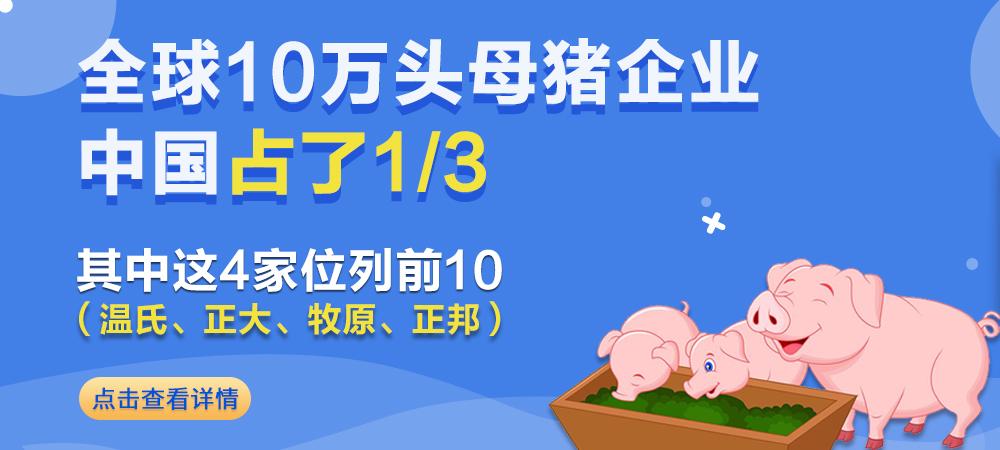 你知道吗?全球10万头母猪企业:中国占了1/3