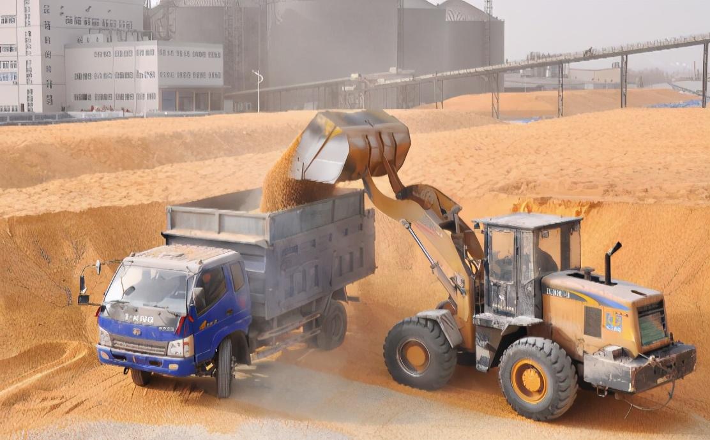 冲冲冲!1月7日饲料原料,开年第一轮涨价潮,玉米豆粕涨不停