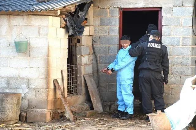 防疫病、防火,还要防偷?两男子盗窃13头生猪被刑拘!