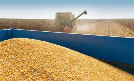 """2020年大豆进口""""不降反升"""",国内的豆粕价格年末呈现逐步攀升的趋势!"""
