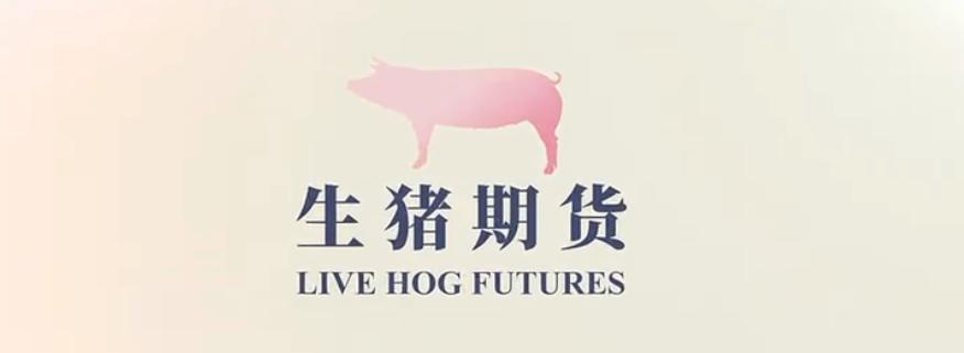 """猪作为国内最大的畜牧品种,也开启了期货""""之旅""""!暨生猪期货宣传片"""