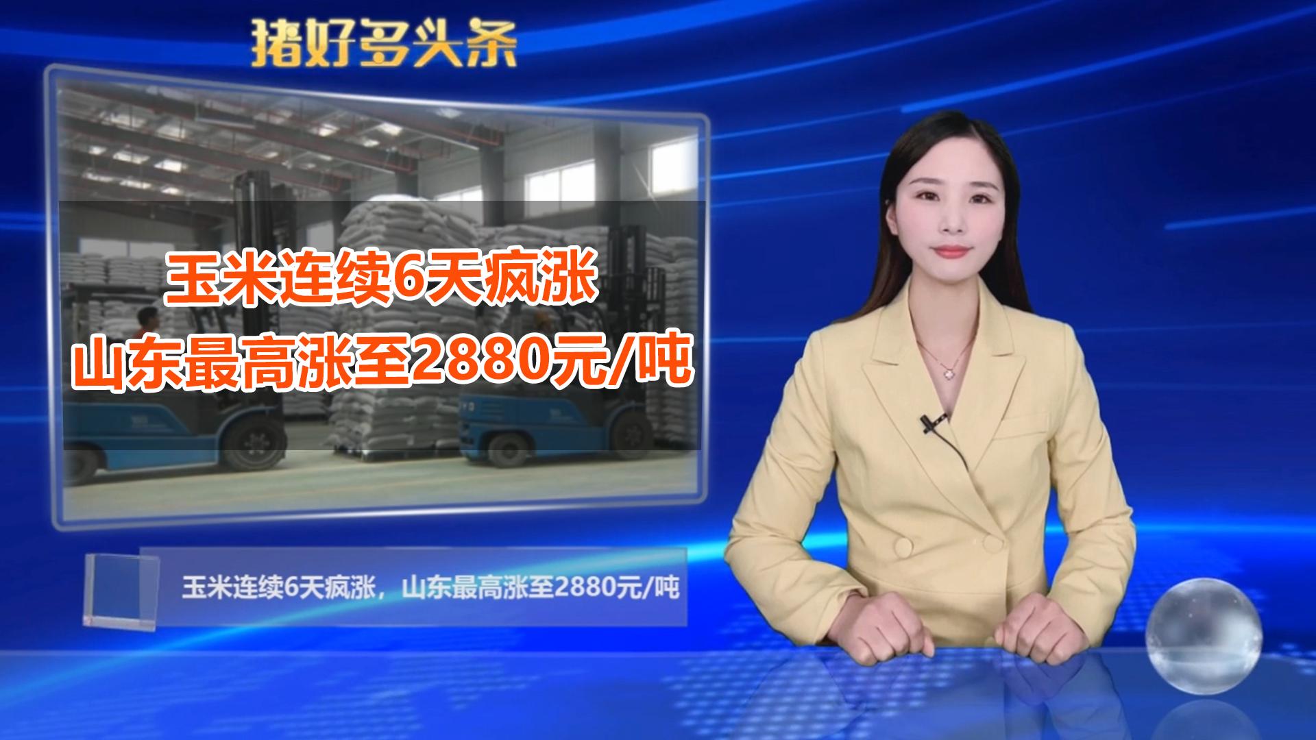 玉米连涨6天,山东最高涨至2880元/吨,农民:会持续到春节吗?