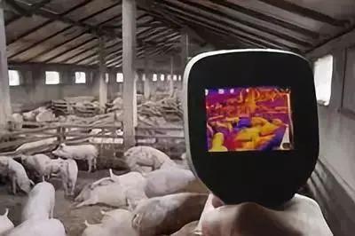 人工智能技术在养殖场景中的应用