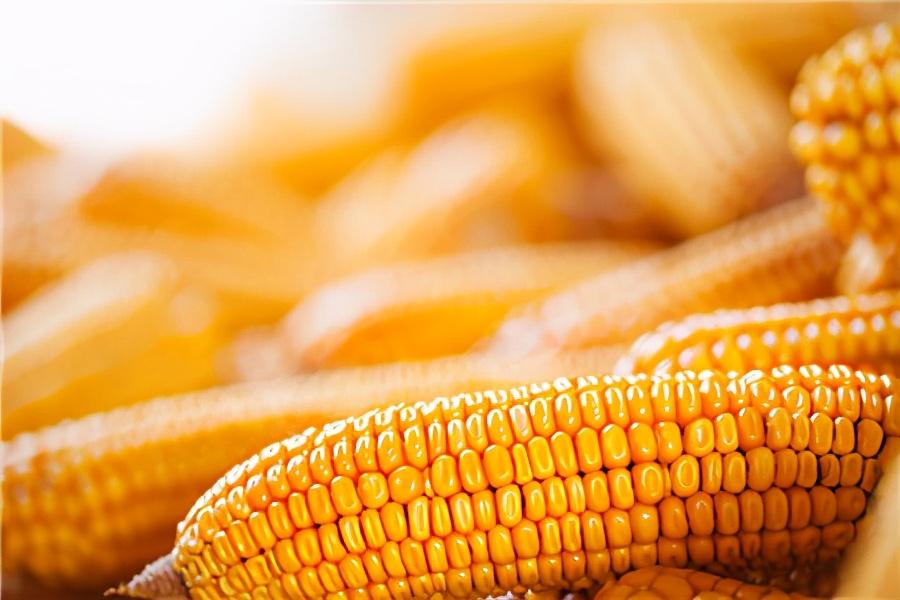 """1月13日饲料原料,玉米涨价农民没赚,豆粕陷入""""涨价循环""""?"""