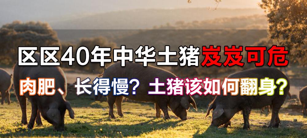 区区40年中华土猪岌岌可危!肉肥、长得慢?土猪该如何翻身?