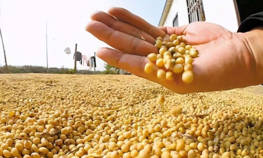"""1.14饲料原料价格,玉米没握在市场手中,豆粕""""恐慌""""大涨?"""