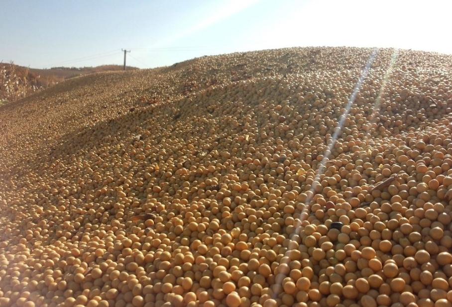 """1月15日饲料原料:玉米补贴会有的,年前备货加剧豆粕""""涨势"""""""