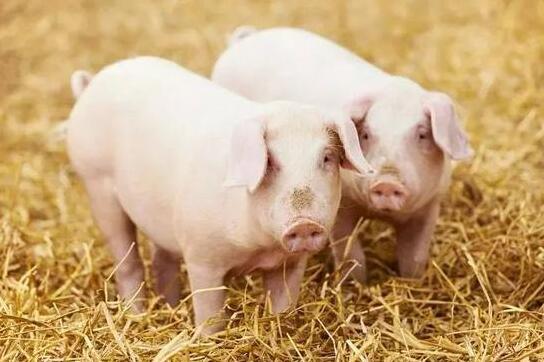 江西证监局:合理运用期货工具 维护生猪生产稳定和市场有效供给