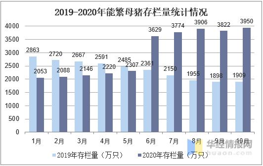 2020年国内生猪养殖情况