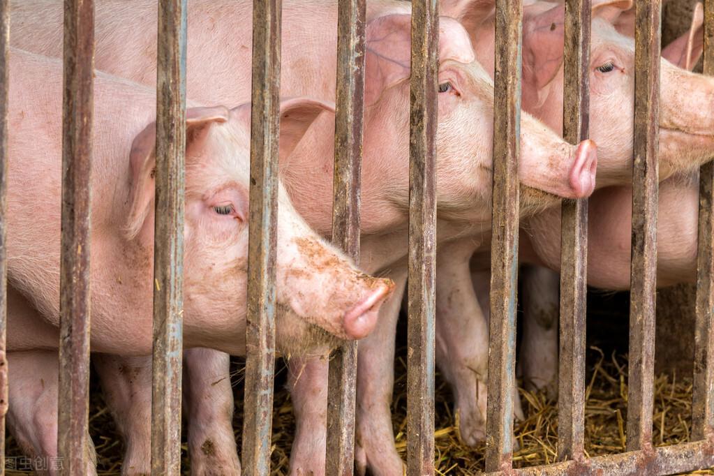 1.17猪价:上涨有空间但别抱太大希望,北方疫情增加猪价变数