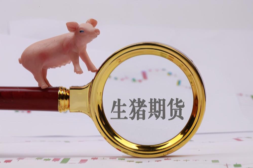 1月18日生猪价格,猪价难涨难跌,当下卖猪赌的成本更高
